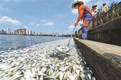 海南一公园35吨鱼死亡:海水鱼不适应湖水水压