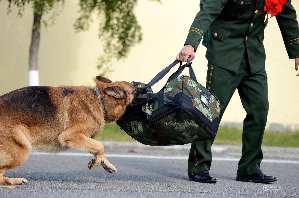组图:南京训犬员退伍 警犬咬行李不让走_新闻_腾讯网 - 自由百姓 - 我的博客