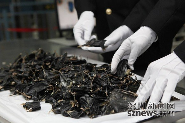 香港旅客携带1410个蟒蛇胆入境被查 案值约310万