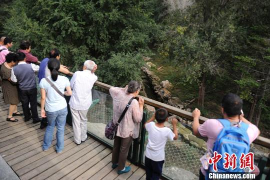 长春动植物园一东北虎遭群虎围攻致死 园方详解