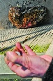 上海动物园回应虐兽 展出残疾狼