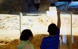 雷峰塔遗址刚清理完 又被游客扔成钱山