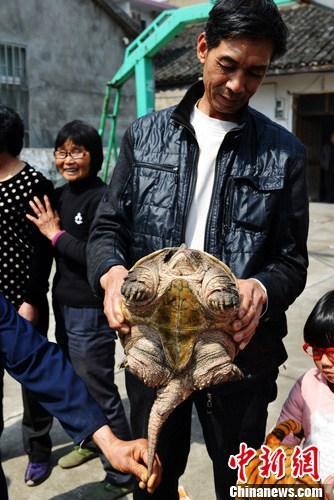 浙江三门村民河边捡9斤重鳄龟引围观