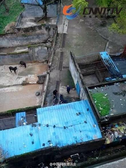 江西宜春一动物园老虎失控 咬死1名工作人员