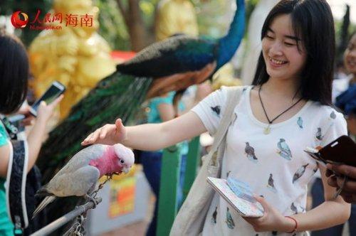 """海南启动""""爱鸟周""""活动:放飞保护野生鸟40只"""
