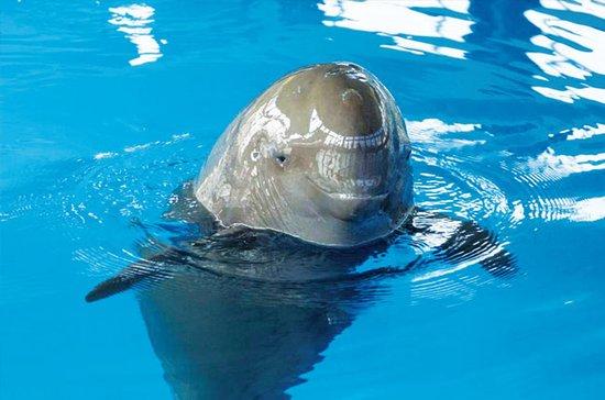 长江中下游20余江豚饿死 相当于去年全年死亡量