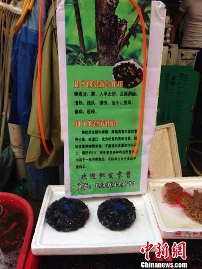 浙江240元一公斤炒知了销售遭遇滑铁卢(图)