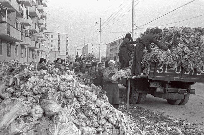 在冬天储藏大白菜可以说是20世纪老北京人冬天必做的一件大事。北方的冬天寒冷,当时还没有蔬菜种植大棚,因此冬季蔬菜比较匮乏,土豆、白菜、萝卜就是市民们过冬的主要菜品。大白菜易于储存,价格便宜,是冬日里居民饭桌上的重要蔬菜。那时候家家户户都会在门口、楼道、地窖储藏几百斤大白菜。由于购买人群和购买量都极大,在当时计划经济体制下,白菜由公社、大队、街道统一安排购销,一到采购时间就家家户户齐齐出动。