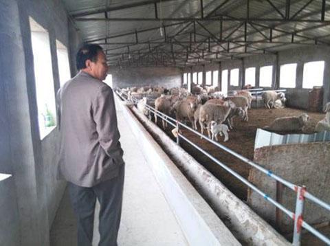 """河北平乡县畜牧补贴何以变成""""唐僧肉""""?"""