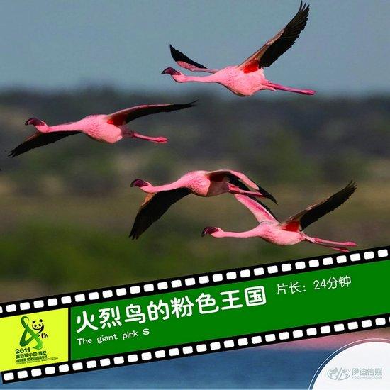 2011雅安电影节国际参展影片《火烈鸟的粉色王国》