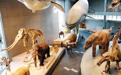 世界首个主题制自然博物馆亮相 藏品近29万件