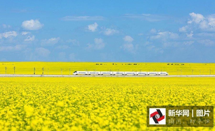 西北最美高铁线:一辆开往花海中的列车2016.7.29 - fpdlgswmx - fpdlgswmx的博客