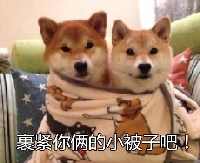 新闻哥吐槽:情侣2万元卖掉亲女儿,转身花2000买宠物猫,枉为父母!图片