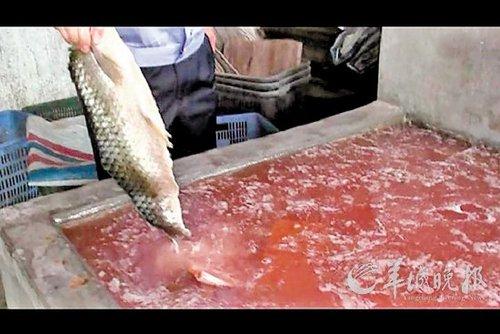 广东1黑作坊工业盐腌制毒鱼干 一年卖掉4万斤