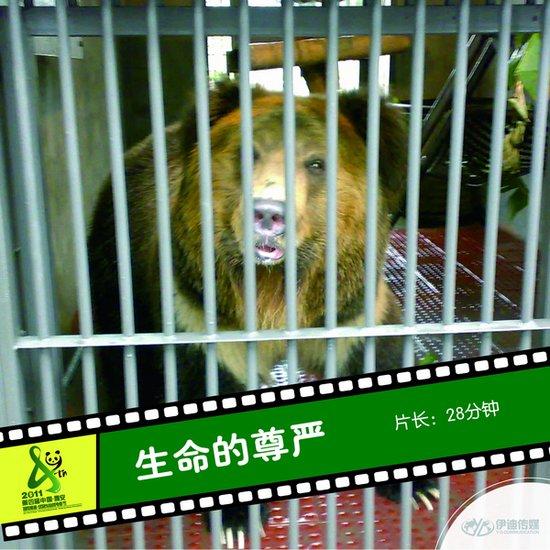 2011雅安电影节国内参展影片《生命的尊严》