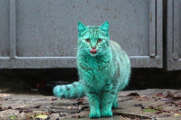 保加利亚现绿色猫咪 长期睡在绿色废弃物中