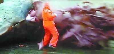 法罗群岛一头死亡抹香鲸突然爆炸 只剩皮囊