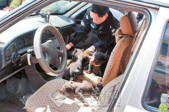"""司机载22只黑熊被查 """"指熊为狗""""遭识破已被刑拘"""