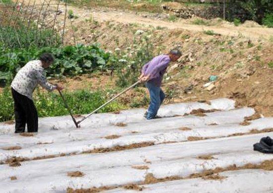 老人和妇女种田,都在50岁以上