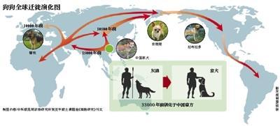 科学家揭秘汪星人起源:祖先都来自中国南方