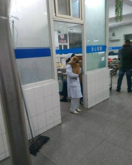 网曝东海县人民医院护士抱宠物狗上班
