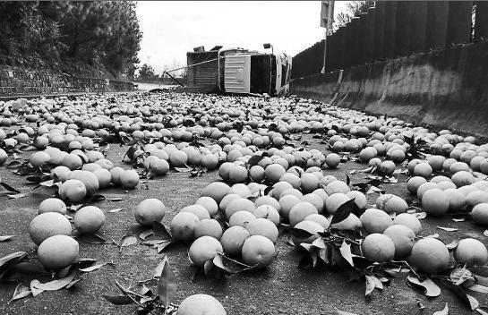 3日,在昆磨高速公路,一辆货车侧翻将3吨橙子撒满公路。但令人欣慰的是,经过清理,没破损的橙子一个不落地都被收了回来。