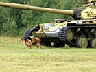 俄军还在用军犬练习反坦克