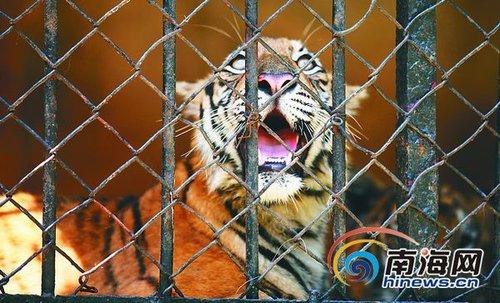 动物园因为经营不善,资金匮乏,珍稀动物的数量不断减少.如今,