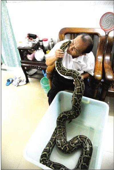 海口六旬翁养蟒蛇当宠物 同住7年待它如家人