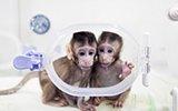 中国科学家成功克隆出非人灵长类动物