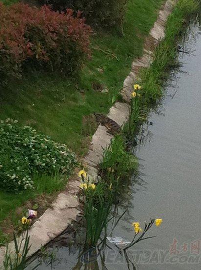 上海一河道中出现鳄鱼(图)