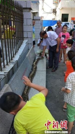 海南六旬老人与蟒蛇同吃住情如亲人