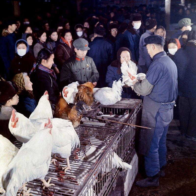 20世纪70年代,东单菜市场,市民在春节前夕购买活禽。在那时的北京,只有在重大节日前夕,才有活禽供应。