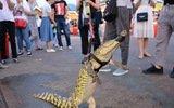 5摊主街头遛鳄鱼 制作鳄鱼串引围观