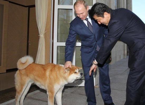 """日本""""赠狗外交""""失败被嘲笑:对强者摇尾真丢人"""