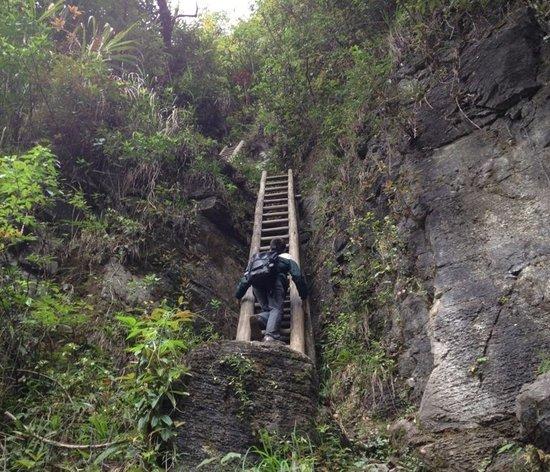 湖南一山村儿童每天需攀爬垂直天梯上学(图)