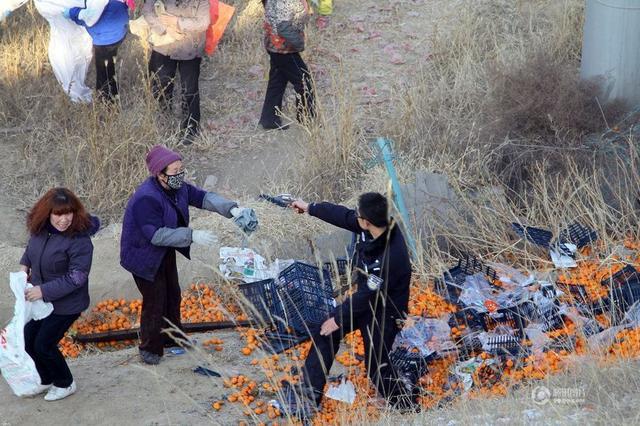 甘肃榆中4人聚众哄抢橘子被拘 30人受批评教育