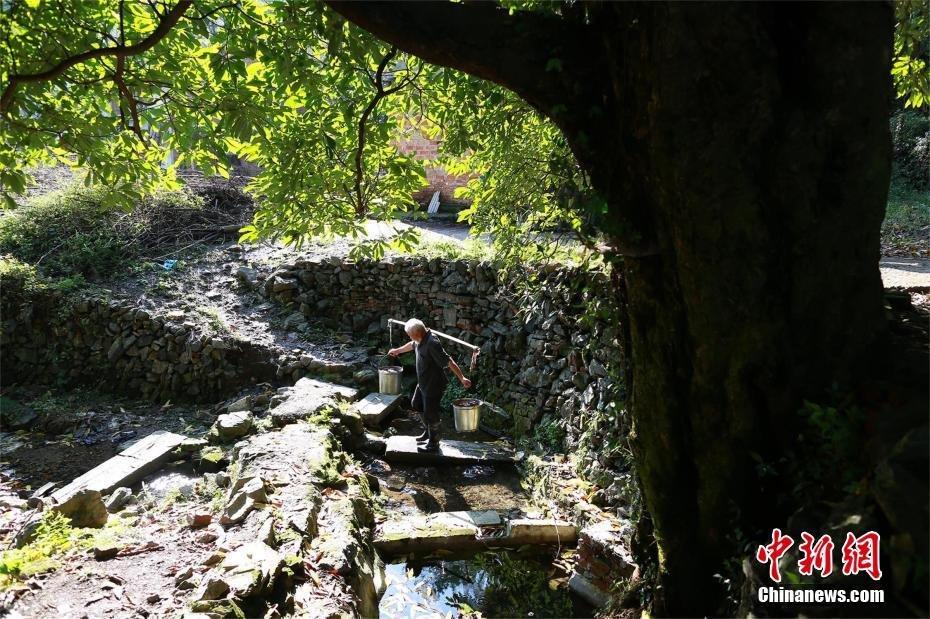 湖北现千年金丝楠木 树下泉水长流2016.10.20 - fpdlgswmx - fpdlgswmx的博客