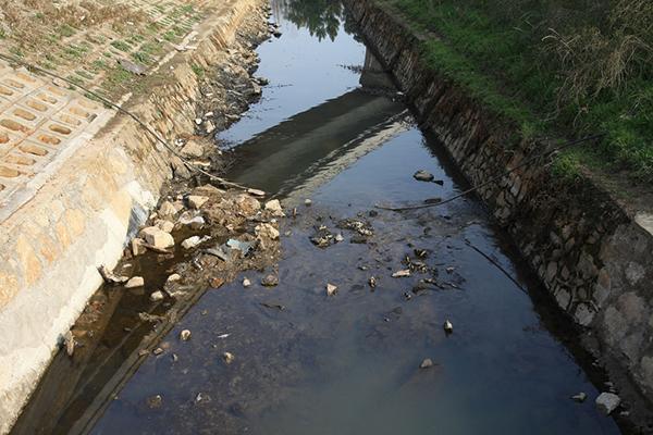 武汉一湖泊连续4年死鱼 漂浮堆积岸边腥臭刺鼻