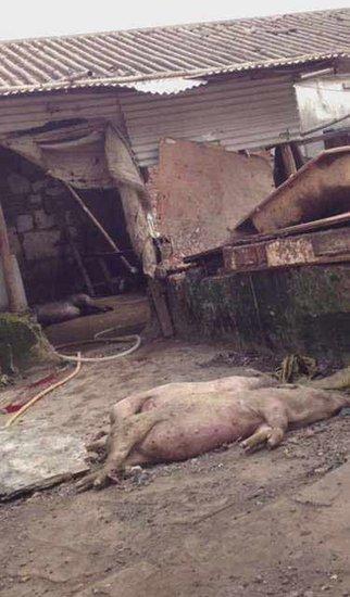 深圳黑作坊日产万斤死猪肉流入市场(图)