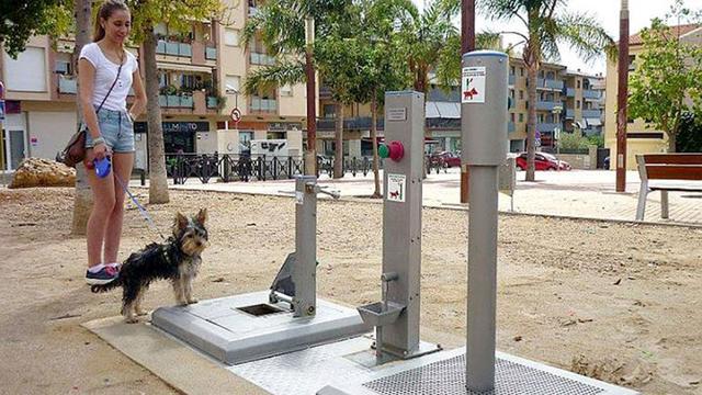 西班牙小城为狗建造专用厕所惹争议(组图)