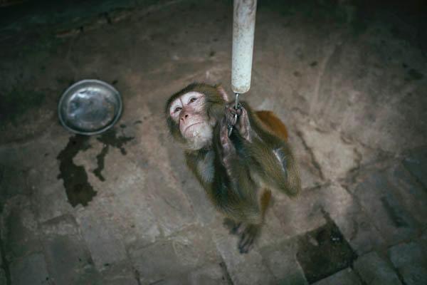 """环球时报:有关部门拿公众当""""猴子""""折腾春节假"""
