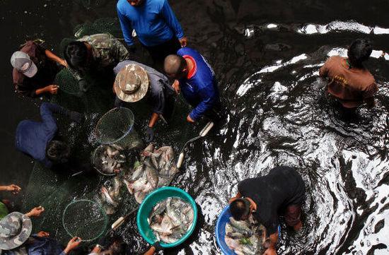 泰国当局派人到商场底部捕鱼(图片来源网络)