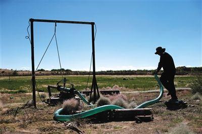 内蒙古鄂尔多斯化工区逾万只珍禽离奇死亡(图)