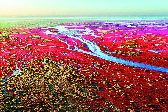"""黄河口""""红色海洋"""""""