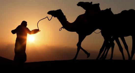 越南科普书将骆驼称作世界最大鸟类 遭家长投诉