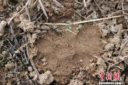 湖北长阳县疑似出现濒危动物金钱豹踪迹(图)