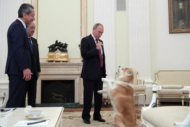 普京访日结束淡定面对领土争议 称日本很天真