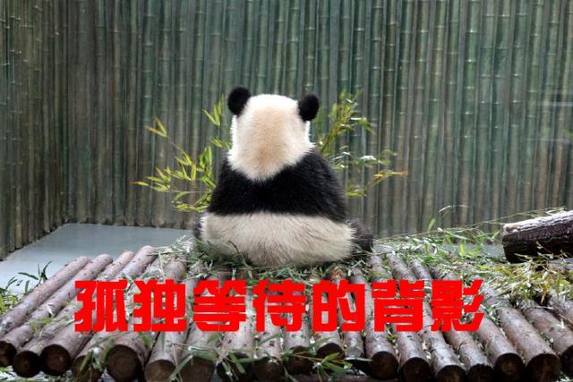 燧发枪结构图 - 中国新闻网