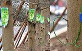这条街大树移植,被集体打点滴,挂满点滴袋